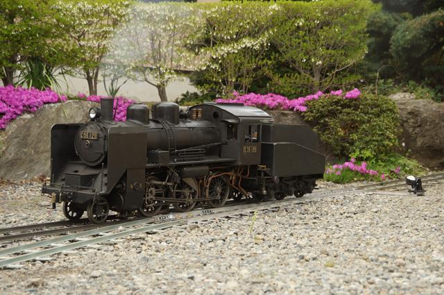 ライブスチーム C56 129とだるま転轍機と満天星躑躅の新緑と芝桜の庭園鉄道
