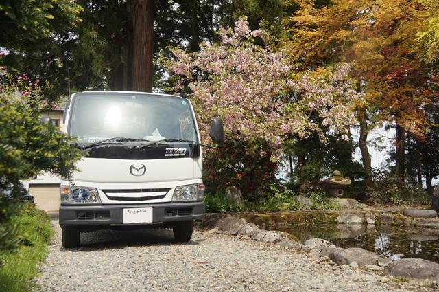 マツダタイタンと桜
