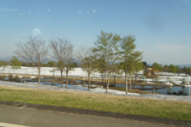 芝生はまだ雪