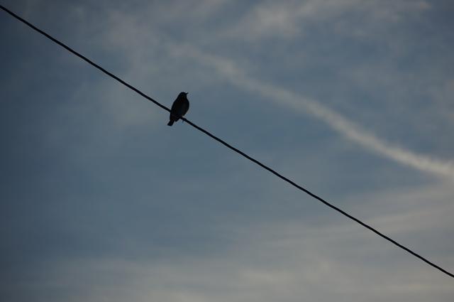 夕焼け空と野鳥