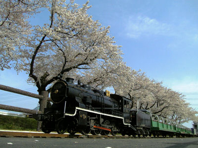 桜と9600ミニSL・ライブスチーム