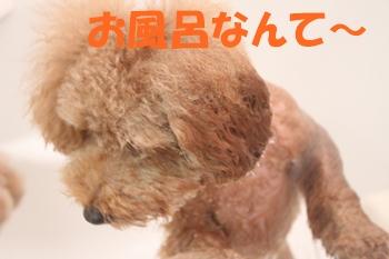 IMG_9927-1.jpg