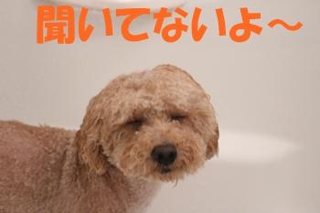 IMG_9932-1.jpg