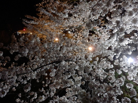 松本城 (87)