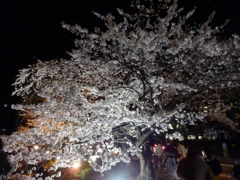 松本城 (93)