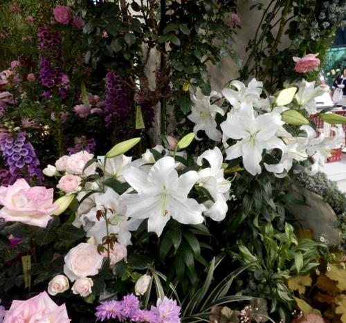 グレス・ケリーの庭(5)