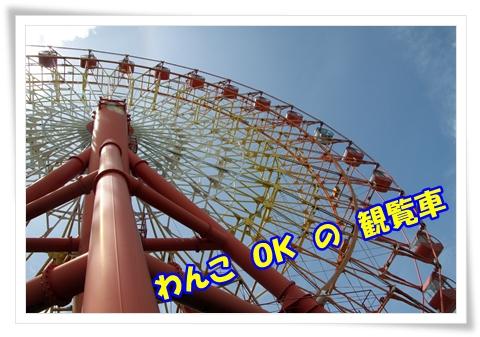 IMG_12761.jpg