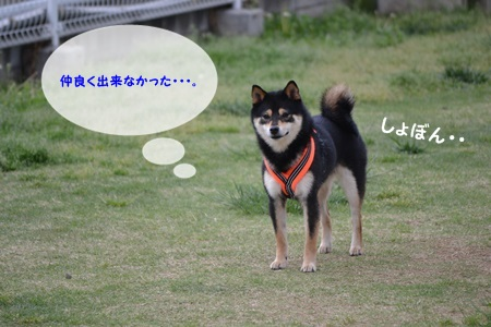 DSC_0510_2014051508532495d.jpg