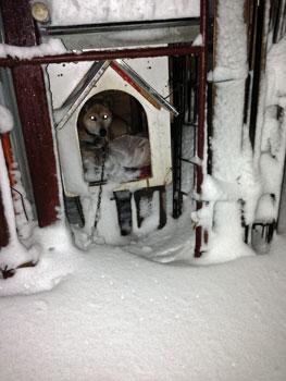 犬は小屋でふてくされ
