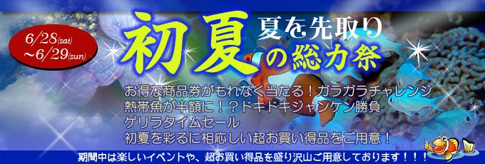 banner_earlysummer_20140627131124577.jpg
