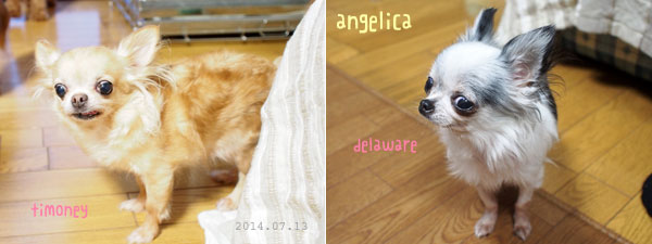angelica071301.jpg