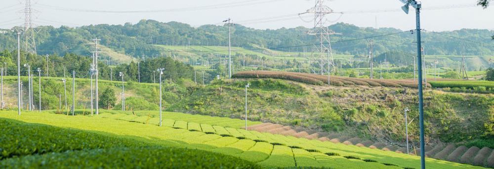 六郷茶農協周辺
