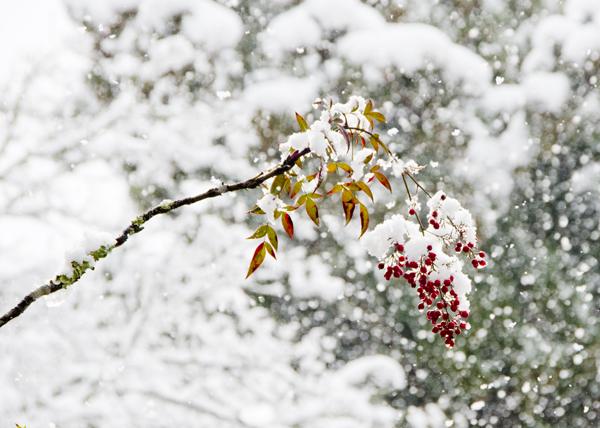 円通寺雪4