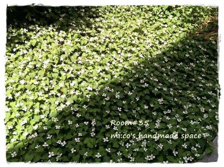 裏庭の薬草