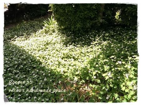 裏庭の薬草1