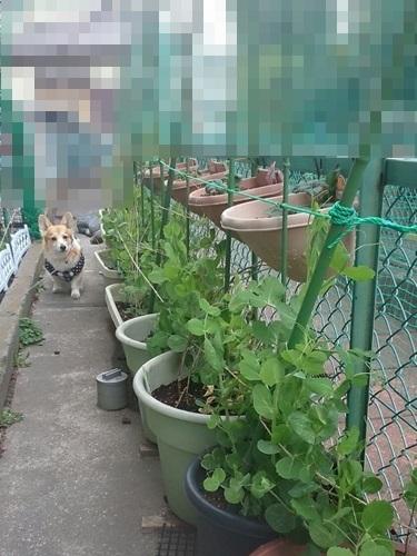 1394777953743-crop.jpg
