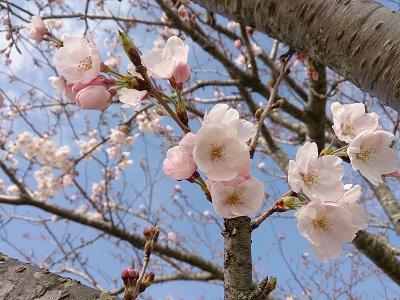 翔 2014.3.29-1