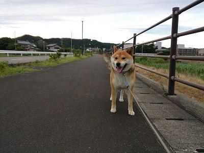 散歩 2014.8.2