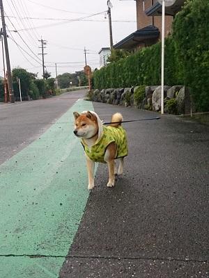 翔 2014.9.11-1