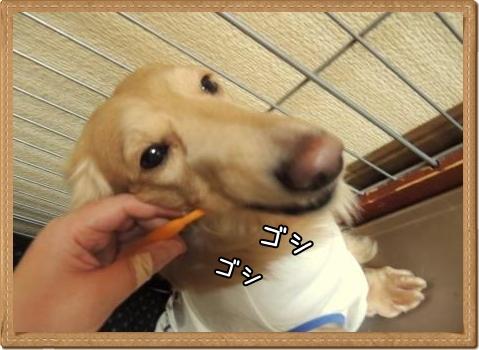 歯磨きりゅう1