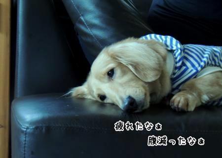 疲れたなぁ