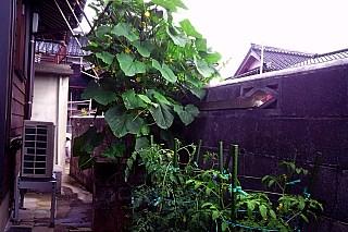 20140720_green.jpg