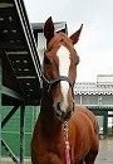 20140804_horse.jpg