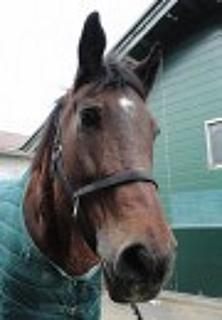 20140818_horse.jpg
