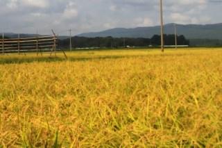 20140910_inaho.jpg