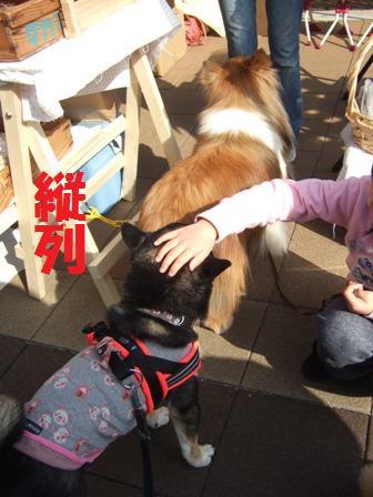 blog6811.jpg