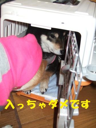 blog6862.jpg