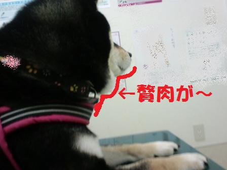 blog6894.jpg