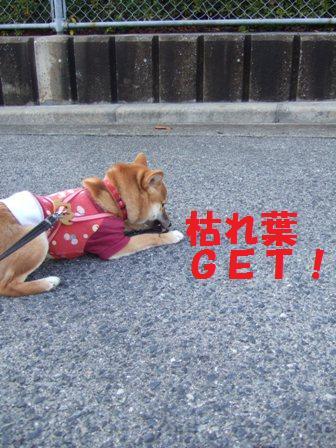 blog6917.jpg