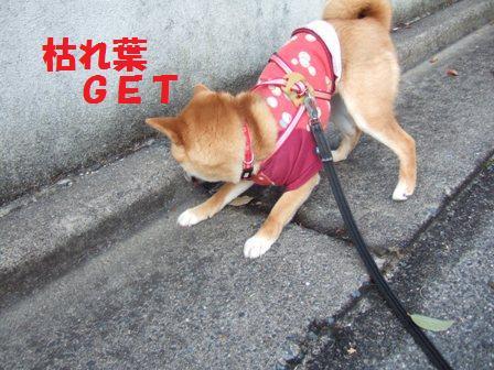 blog6920.jpg
