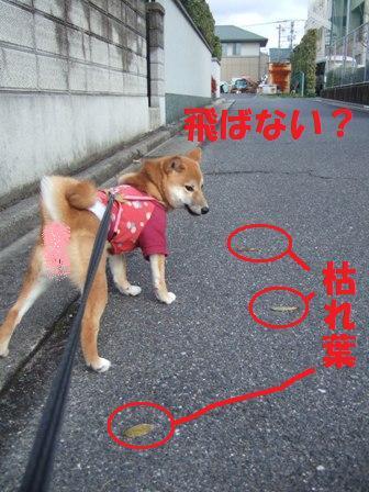 blog6921.jpg