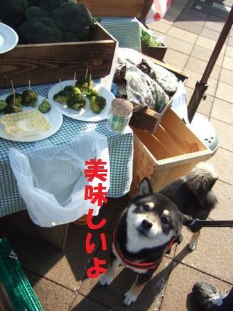 blog6933.jpg