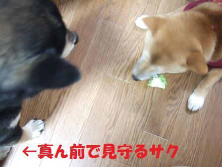 blog6949.jpg