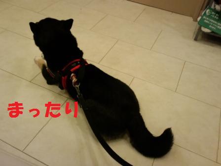 blog6960.jpg