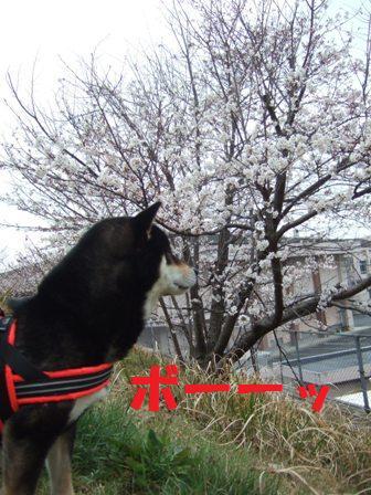 blog6968.jpg