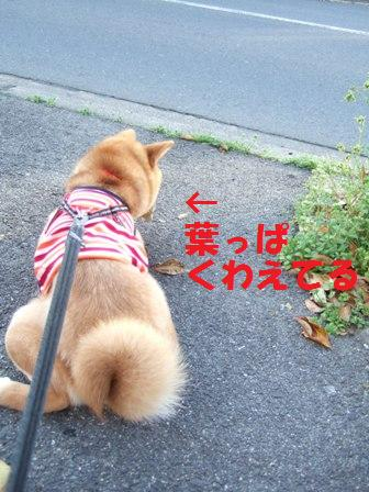 blog6990.jpg