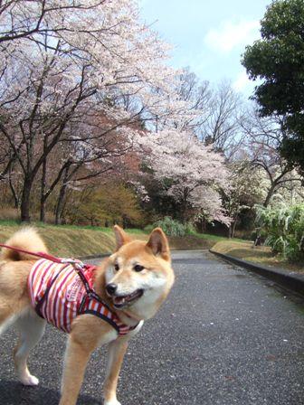 blog6998.jpg
