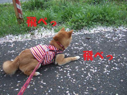 blog7011.jpg