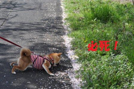 blog7018.jpg