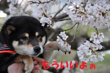 blog7034.jpg