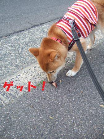 blog7046.jpg