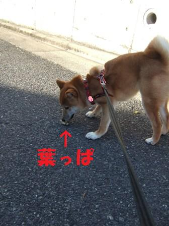 blog7063.jpg