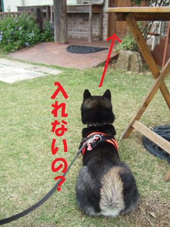 blog7084.jpg