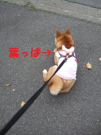 blog7099.jpg