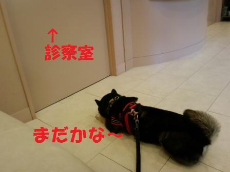 blog7108.jpg
