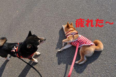 blog7195.jpg